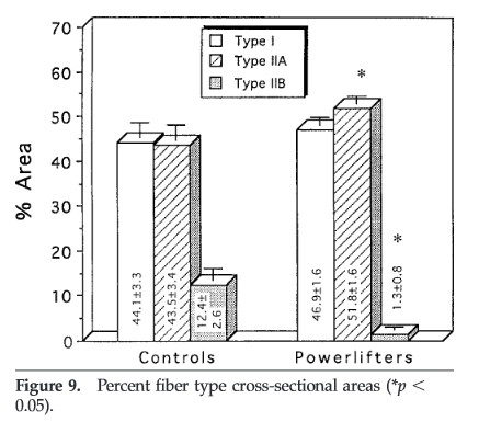 Similar proportions of Type I and Type II (IIa and IIb combined) fibers in pretty strong powerlifters and untrained controls. From Fry et. Al, 2003.
