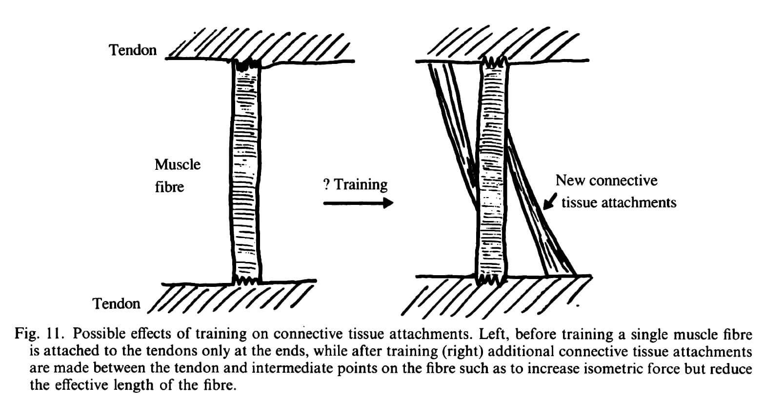 From Jones, 1989